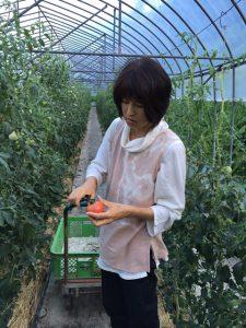 トマトの収穫体験